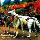Powerdogs 8. El Hipervínculo con los líderes.