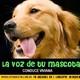 La voz de tu mascota edicion nº 98 19-8-2017