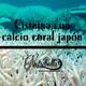 Nutribella - CISTEINA CON CALCIO DE CORAL JAPÓN