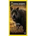 Depredadores Prehistoricos (7de7): El lobo gigante