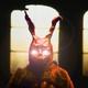 El Conejo Rojo Dice | 02 - Los Tanukis (Mitología)