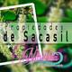 Nutribella - PROPIEDADES DEL SACASIL