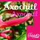 Nutribella - ACAXOCHITL