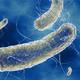 (T4) El Café Cuántico 2: Microorganismos a la carta