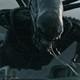 Besa al xenomorfo: alien en mala sangre radio