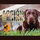 Acción Canina Radio 44