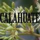 Nutribella - CALAHUATE