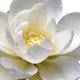 Meditación de la bondad amorosa