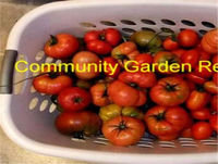 Community Gardens need to be started for folks to have Food