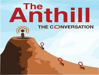 Anthill 21: Growing up