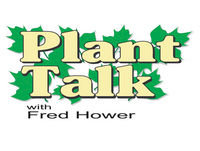 Indoor Plant Care 12-16-17