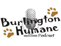 Burlington Humane Podcast, Episode 10: Cold weather and pets, barn cats and Xena: a feline survivor.
