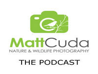 Episode 43: Behind the Shot - Glossy Ibis
