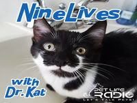 "Nine Lives with Dr. Kat - Episode 8 Are You ""Catified""? Did You Know That Your Home Can Be Gorgeous and Sup..."