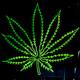 Efer 416 (10-12-17): Cannabis e ciencia. Versión estendida.